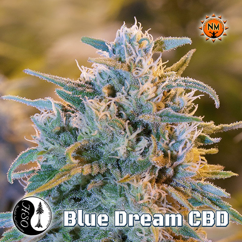 Blue Dream Cbd